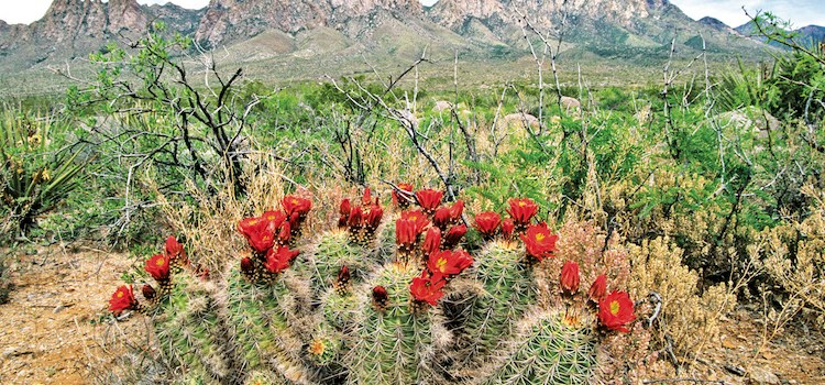Celebrate five years of Organ Mountains Desert Peaks Monument