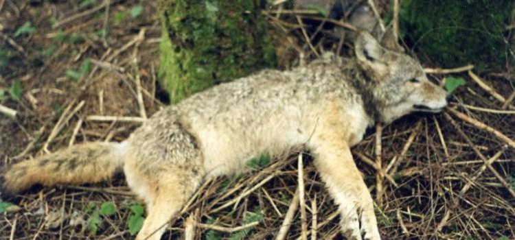 Wildlife Services – Doña Ana County