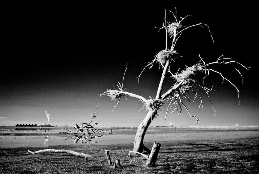 Osceola Refetoff, Dead Tree Nests
