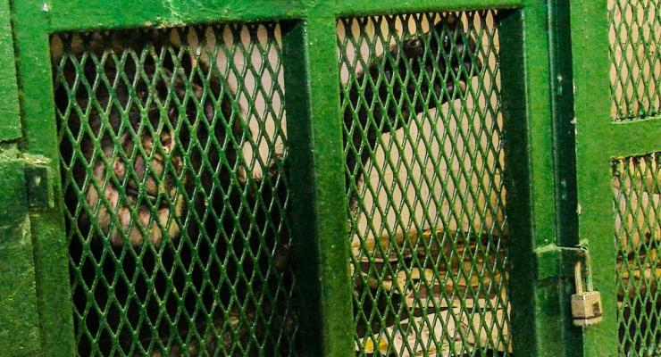 D.A. Pennebaker And Chris Hegedus On Their New Doc, <i>Unlocking The Cage</i>