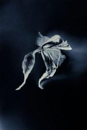Orchis - A. Cemal Ekin