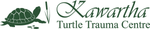 TurtleTraumaCentre