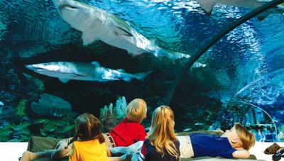 Sleep-with-the-sharks-ripleys-aquarium-canada