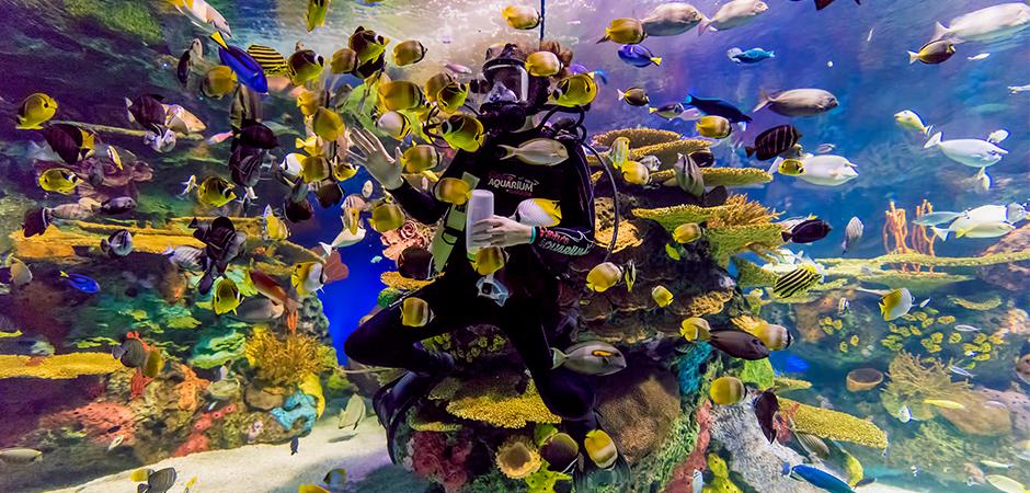 Rainbow Reef Aquarium Of Canada