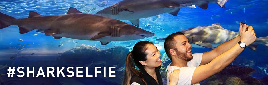 Shark-Selfie-Promos-page-banner