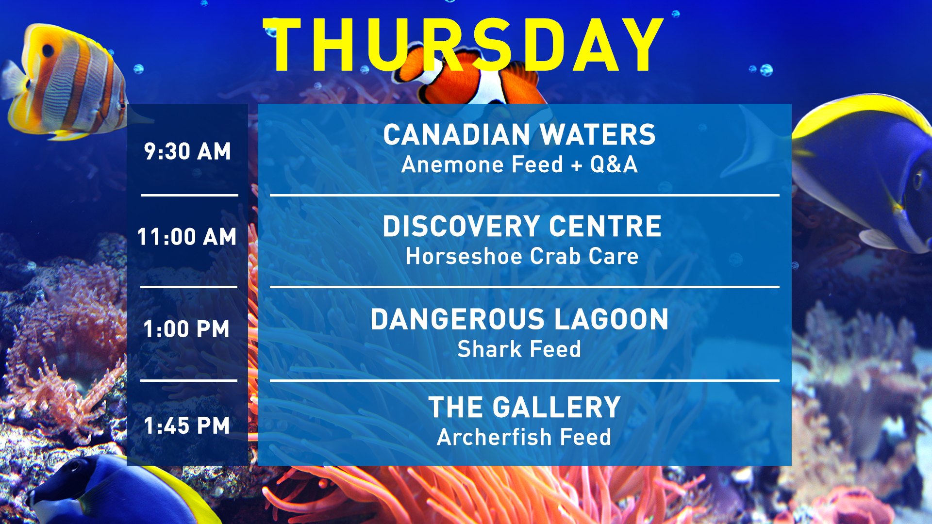 Aquarist-Talks-Thursday-WEB-1