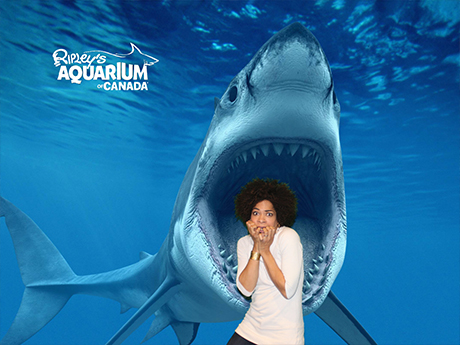 arisa-cox-ripleys-aquarium-of-canada