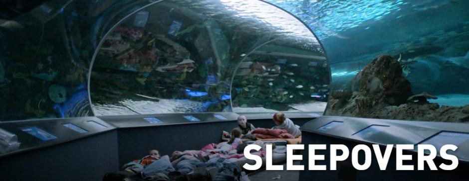 Sleepovers Aquarium Of Canada