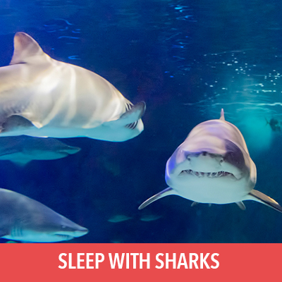 sleep with the sharks