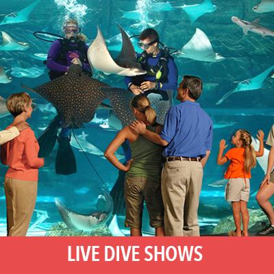 live dive shows