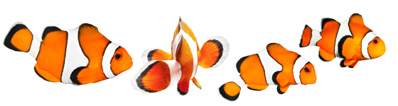 Coral Reef - Clownfish