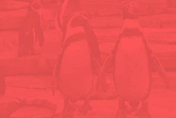 penguinplayhouse