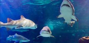 sleep with the sharks family edition