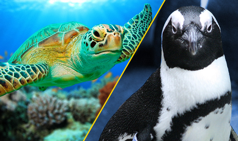 Header-With-two-very-upset-looking-aquarium-animals