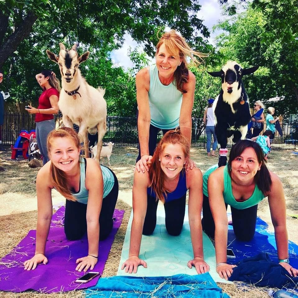 Goat_Yoga_R