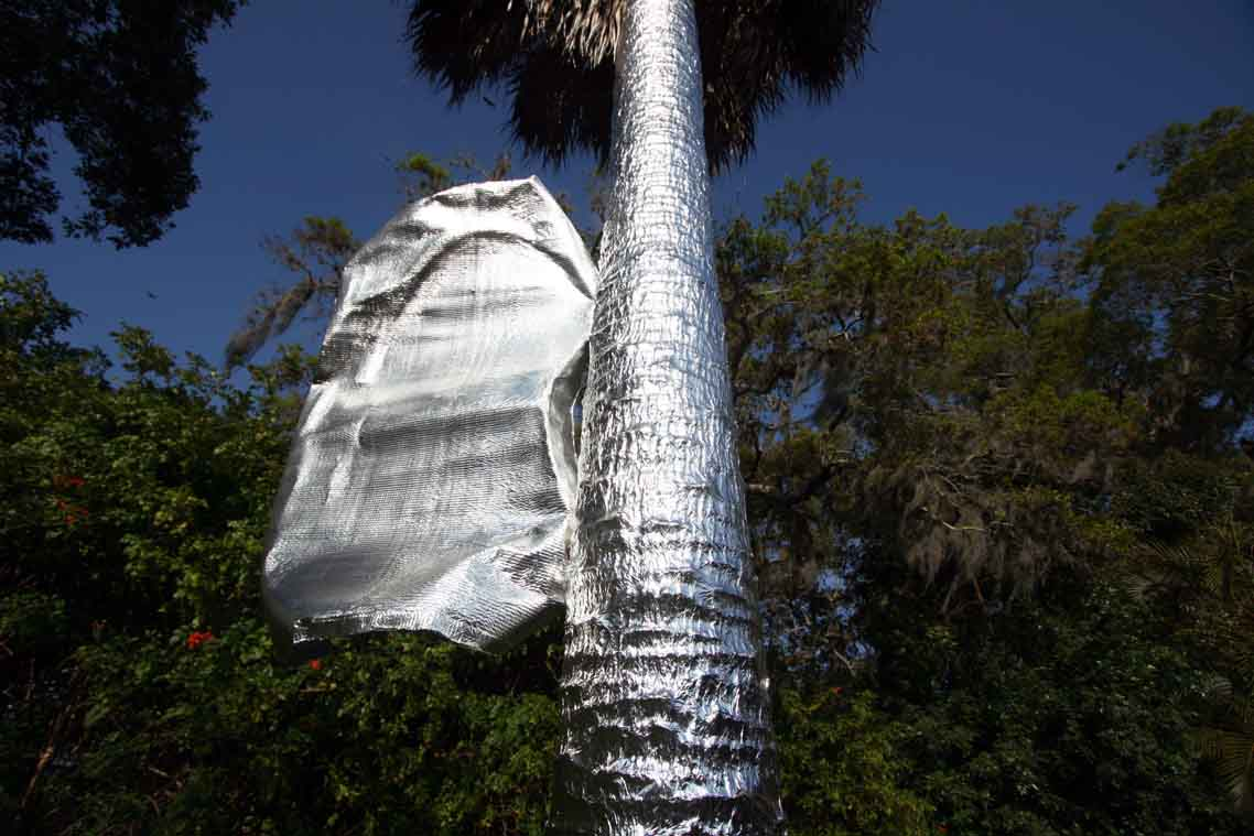 Man Covers Home Amp Palm Trees In Aluminum Foil