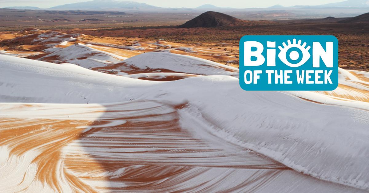 Rare Snowfall Dusts The Sahara Desert