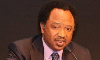 Buhari's integrity not enough —Sen. Sani