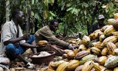 Buhari signs 2010 International Cocoa Agreement