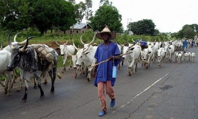 Plateau Youths vow to resist plans to convert communities uprooted by herdsmen for Ruga