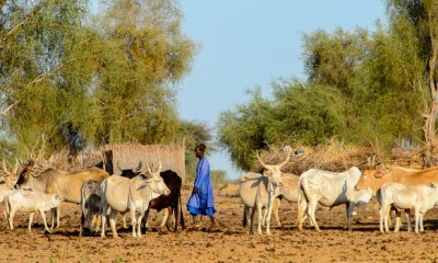 Senegal, Mauritania at risk of hunger, experts say