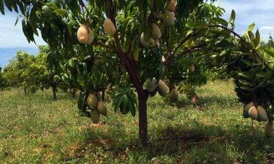 Missing boy found dead on a tree in Ogun