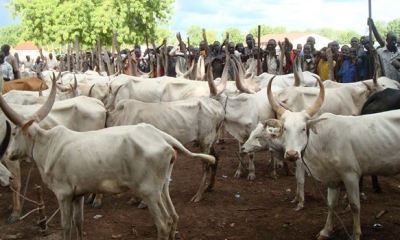 ZAMFARA: Govt discovers 2 buildings used as hideouts by cattle rustlers