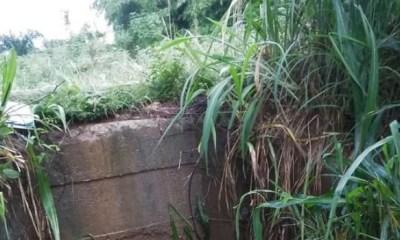 DELTA: Bodies of 3 decomposing men found in bush