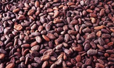 CBN policy leaves cocoa stranded at ports