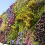 Jasa Tukang Taman & Taman Vertikal (VERTICAL GARDEN) surabaya gresik sidoarjo