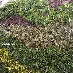 Jasa Pembuatan Vertical Garden, Tukang Taman Vertikal Profesional & Design Vertical Green Indonesia sidoarjo