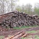 RI lumber - Tamarack - Eastern Larch