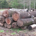 Black Walnut logs