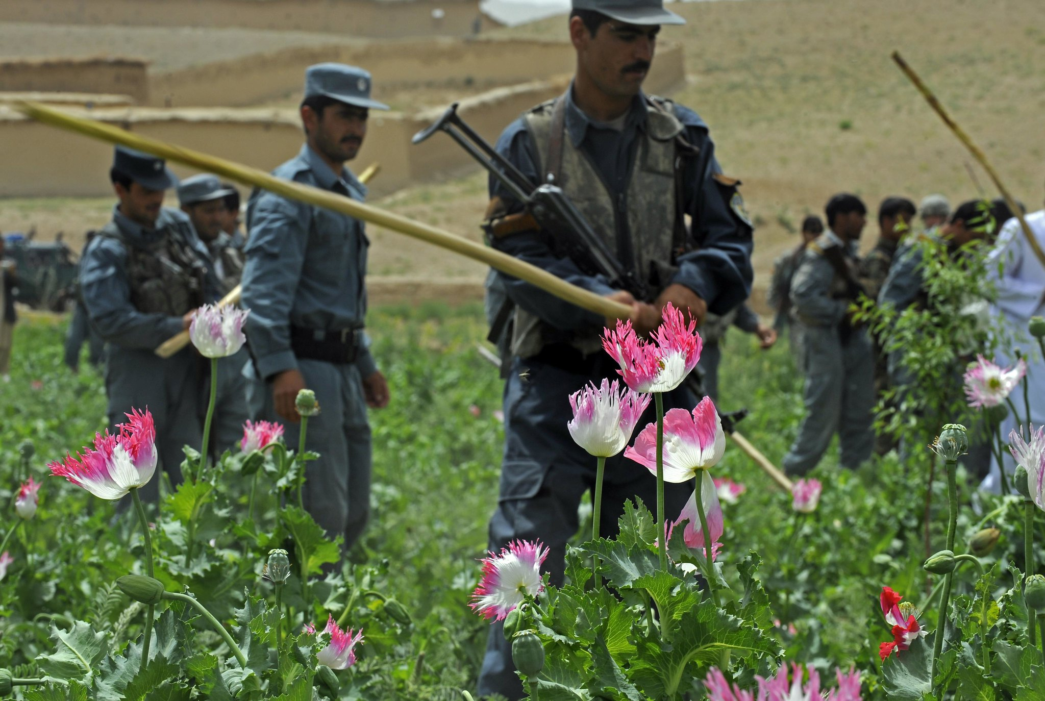 Eradicating Illicit Crops: Lessons from South America for Afghanistan