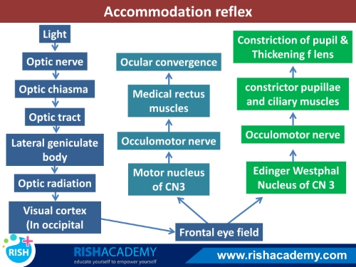Accomodation reflex www.rishacademy.com (500)