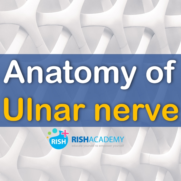 Anatomy Ulnar nerve www.rishacademy.com