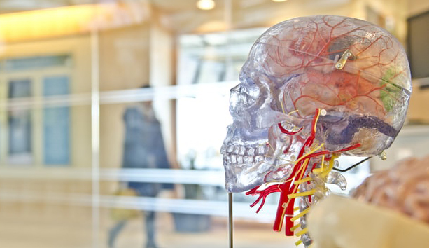 How to Study Anatomy in Medical School anatomy (2)