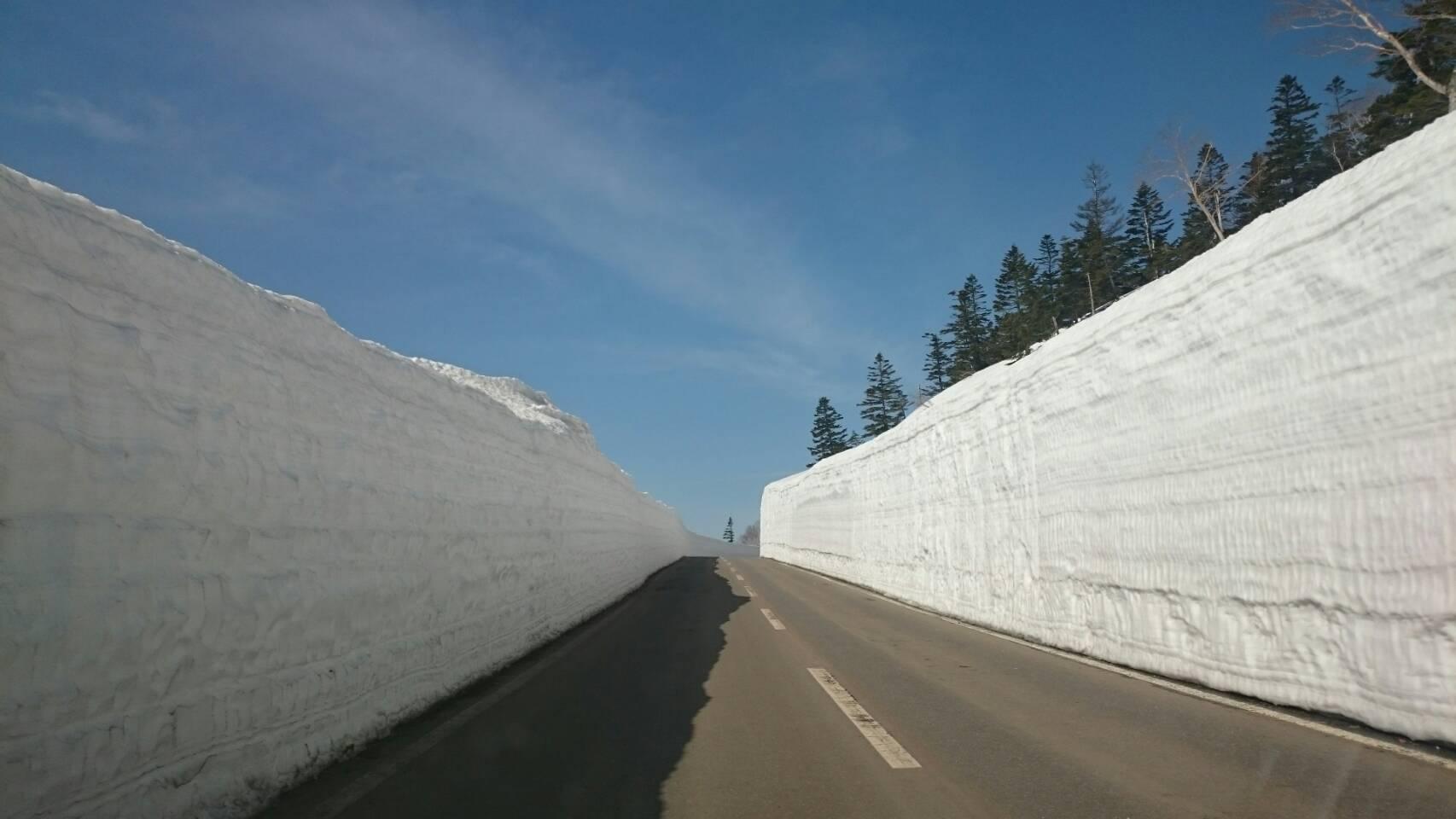 雪の回廊桜とともに