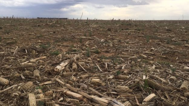 The drought has caused a maize shortage in South Africa