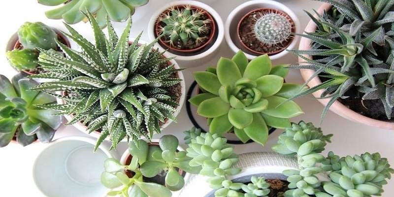 All About To Know Succulents That Refresh You All Day