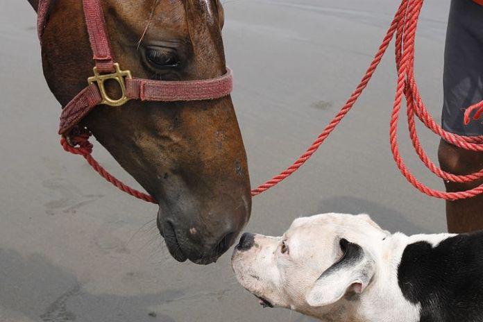 Bijna alle letselschades door dieren veroorzaakt door hond of paard