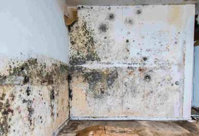How long does it take for mold to grow from water damage