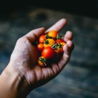 Inilah 5 Makanan Yang Membuat Bahagia