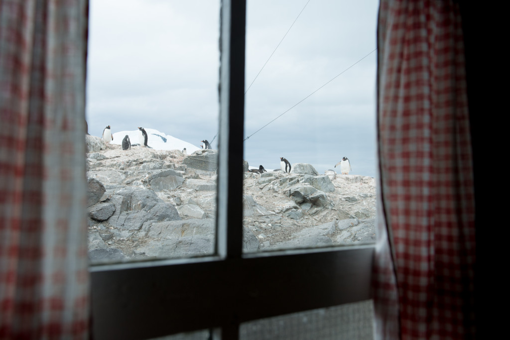 A view of the pengiuns from the window of a small British base, Port Lockroy, on a tiny island off the Antarctic Peninisula