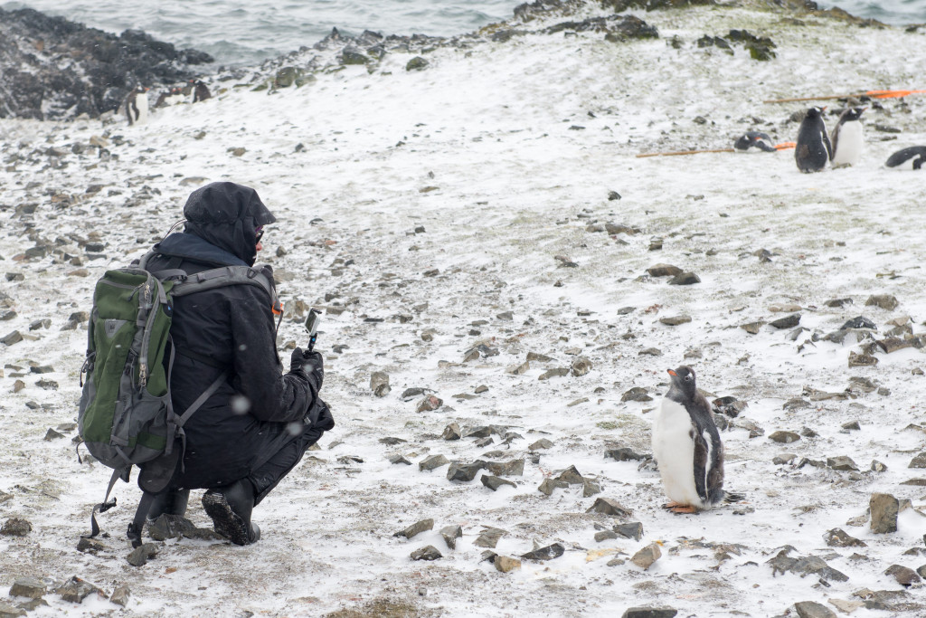 A gentoo penguin and I face off.
