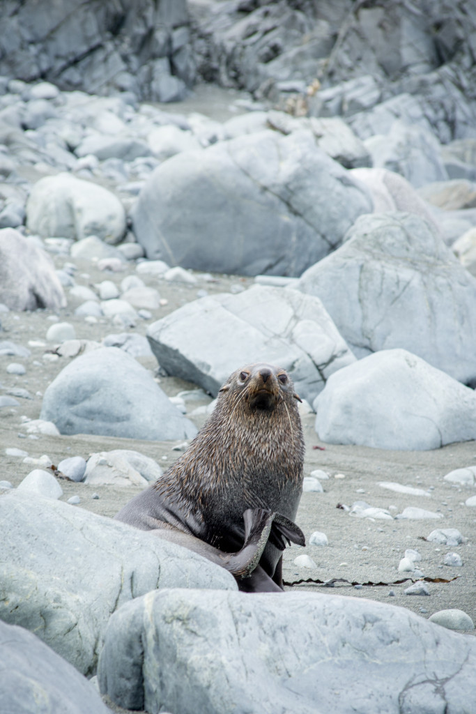 This seal can't believe he (or she) is having his (or her) photo taken