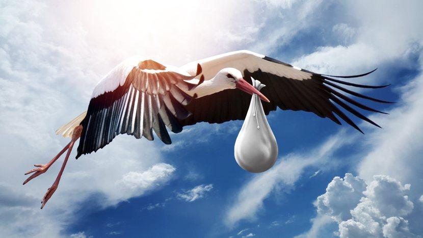 Utero in affitto: un fagotto portato da una cicogna