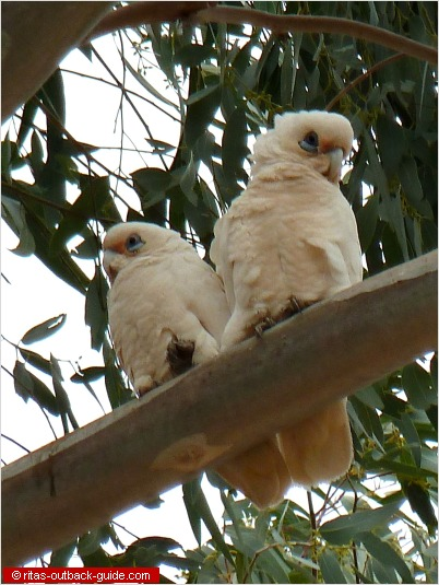 Bird Watching In Australia Facts Amp Pictures Of