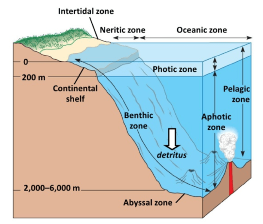 Horizontal Zonation Ocean Stratification Benthic Population Ritus