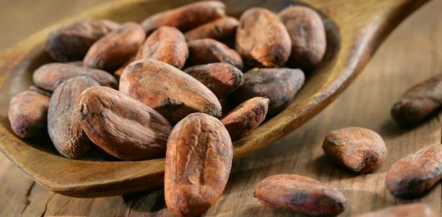 Risultati immagini per fave di cacao